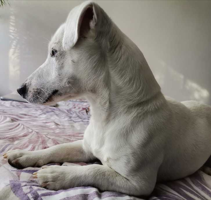 JACK RUSSEL Animaux 3
